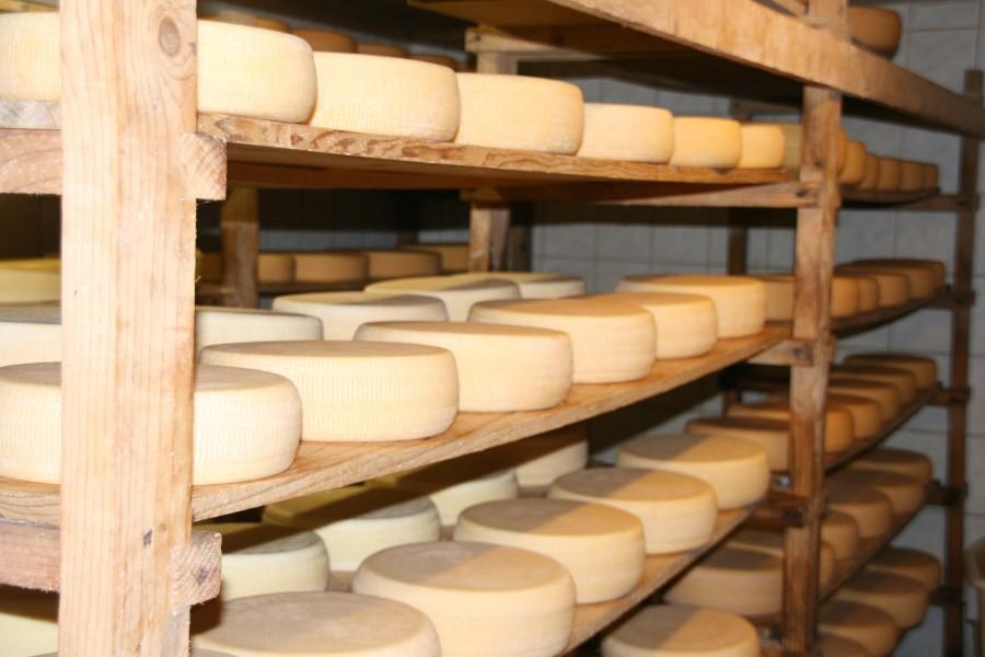 Tschadamer Käse